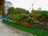 Flowers of Paris