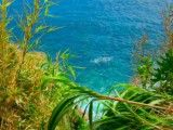 Plant and blue sea