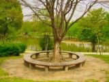 Bench and tree and pond where park is round