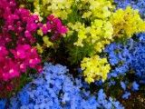 Vivid purple and watery blue and thin yellow flowers
