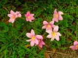 Outlandishness pink flower