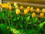 Artificial flower of yellow tulip?