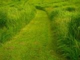 Way of grass