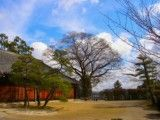 Garden where it is Japanese style that there are pine and large tree