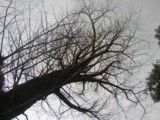 A lot of branches that thin and become it