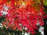 Red autumn tint