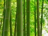Zoom up of bamboo