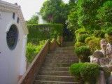 The narrow stairs with planting