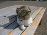 Cat that relaxes on bench