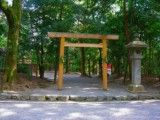 Torii of tree in Atsuta Jingu Shrine