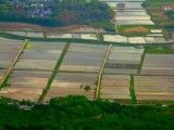 View of rice field