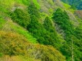 Trees slopes in mountain