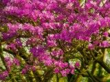 Azalea of red purple to which vividness increases because of light on day?