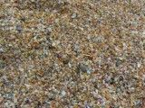 Sand with which shellfish in coast mixed