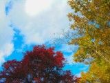Red and yellow autumn tint and sky