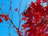 Right bright red massage and left branch and the blue sky