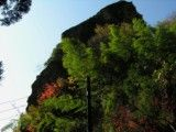 Green and red tree and big rock
