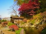 Spectacle of pond and water mill and autumn tint