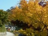 View of residential quarter in hillside with autumn tint