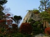 View of bonsai and cliff
