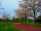 View of park with cherry blossoms