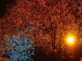 Orange and blue illumination of tree and light of light