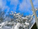 Snow and blue sky that it gets on branch