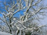 Scenery of branch and snow
