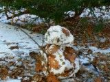 Adhering snowman a lot of fallen leaf
