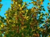 Autumn tint like yellow flame