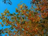 Autumn tint of various colors under tree