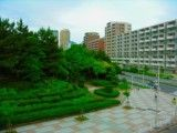 Rich green of apartment house group a park