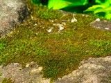 Zoom up of moss that adheres to rock
