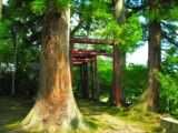 Thin torii enclosed by large tree