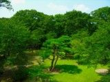 Scenery in garden from hill